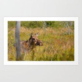 Mr.Moose Art Print