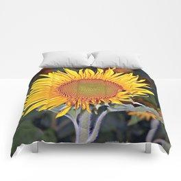 Floating SUN Comforters