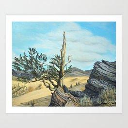 Bristlecone Pine Art Print
