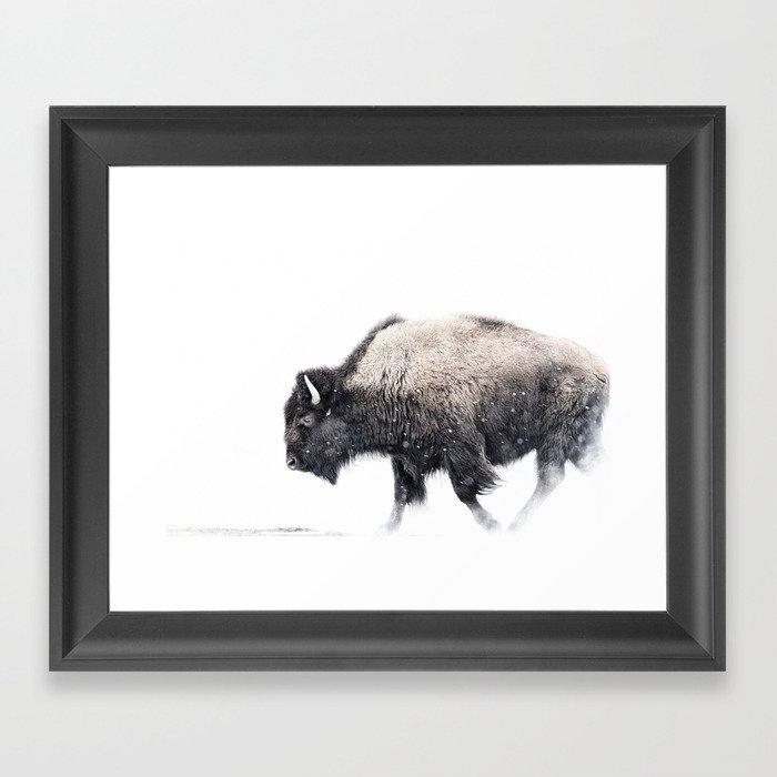 Bison in Yellowstone National Park Gerahmter Kunstdruck