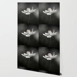White Anemone Flower in Black And White #decor #society6 #buyart Wallpaper