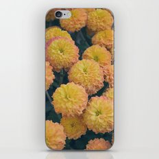Autumn All Over Sunshine Chrysanthemums -- Fall Botanical iPhone & iPod Skin