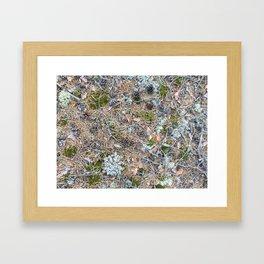 The Forest Floor Framed Art Print