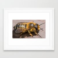 furry Framed Art Prints featuring Furry by Daniele Nicolucci