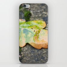 Beauty In The Rain iPhone & iPod Skin