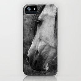 Pferde_Hildesheimer_Feldmark_13 iPhone Case