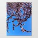 South Portland Spring 2018 (1) by amysturg