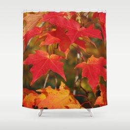Fiery Autumn Maple Leaves 4966 Shower Curtain