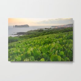 Grapevines and islet Metal Print
