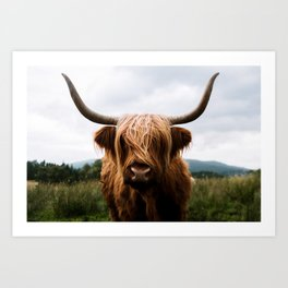 Scottish Highland Cattle in Scotland Portrait II Art Print