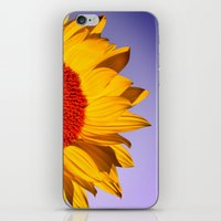 sunflowers iPhone & iPod Skins featuring sunflowers by mark ashkenazi