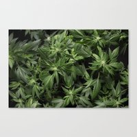 weed Canvas Prints featuring Weed by Vyacheslav Sizov