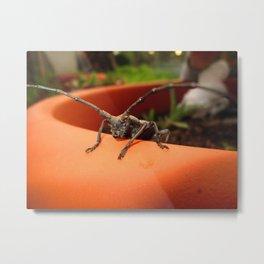 cerambycidae 2 Metal Print