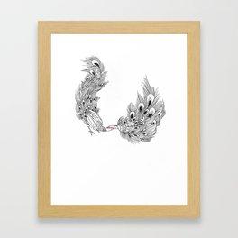 Peacock III Framed Art Print