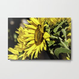 Reminder of Summer Metal Print