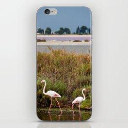 Flamingos in Camargue iPhone Skin