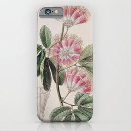 Flower 041 inga harrisii Mr Harris s Inga22 iPhone Case