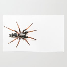 Sergiolus montanus, a stealthy ground spider Rug