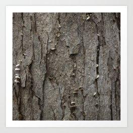Adler Tree Bark Camouflage Art Print