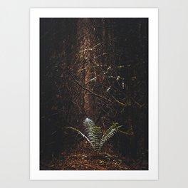 Lonely Fern Art Print