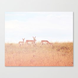 Antelope in Grass Canvas Print