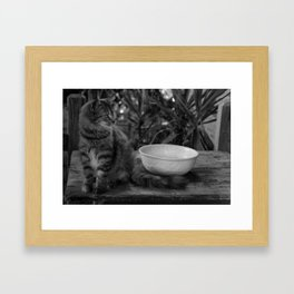 Feral Cat Framed Art Print