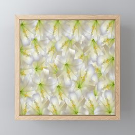 Cotton Seed Lilies Framed Mini Art Print