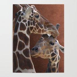 Endearing Giraffes Poster