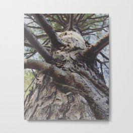 Wood bark Metal Print