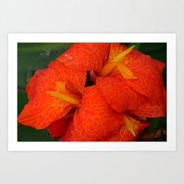 Orange Canna Lily by Teresa Thompson Art Print