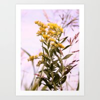 Goldenrod Wildflower Art Print