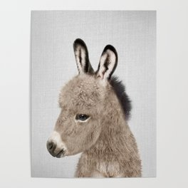 Donkey - Colorful Poster