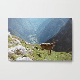 Alpen Goat Metal Print