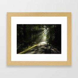 Forest Morning 2 Framed Art Print