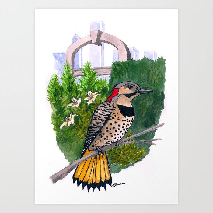 Northern Flicker in Grant Park Rose Garden Art Print
