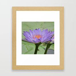 Blue Water Lilies in Hangzhou Framed Art Print