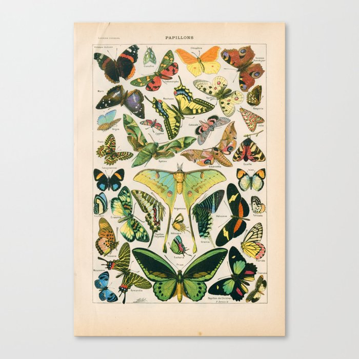 Vintage Butterfly Print Leinwanddruck