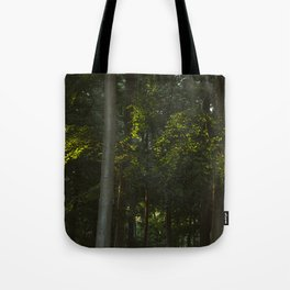Evening sunlight on the leaves of a Beech tree (Fagus sylvatica). Norfolk, UK. Tote Bag