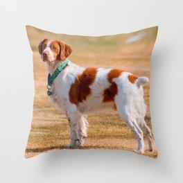 Brittany Spaniel Dog Beautiful Throw Pillow