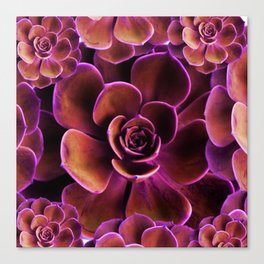 PURPLE TINGED JADE CACTI SUCCULENTS Canvas Print