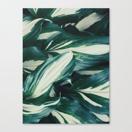 Wavy leaves Canvas Print