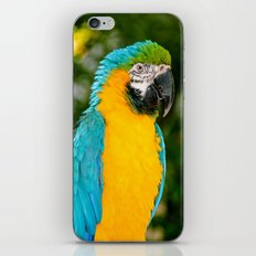 Blue and Gold Macaw Parrot iPhone & iPod Skin