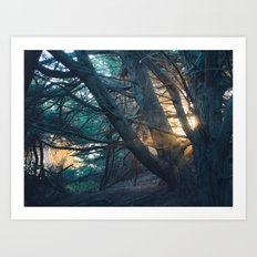 Sunset in the Trees Art Print