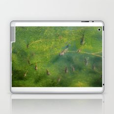 Bluegill Laptop & iPad Skin