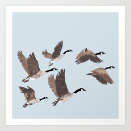 Flock of Canada geese Art Print