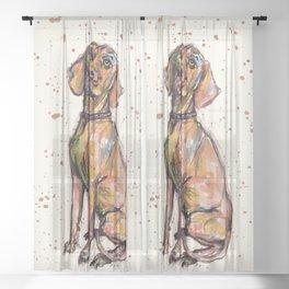Hungarian Vizsla Dog Sheer Curtain