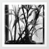 bamboo Art Prints featuring Bamboo by Lindzey42