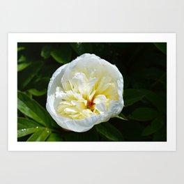 White Elegance Art Print