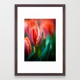 tulip. Framed Art Print