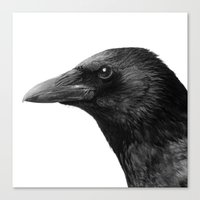 crow Canvas Prints featuring crow by Dreyria